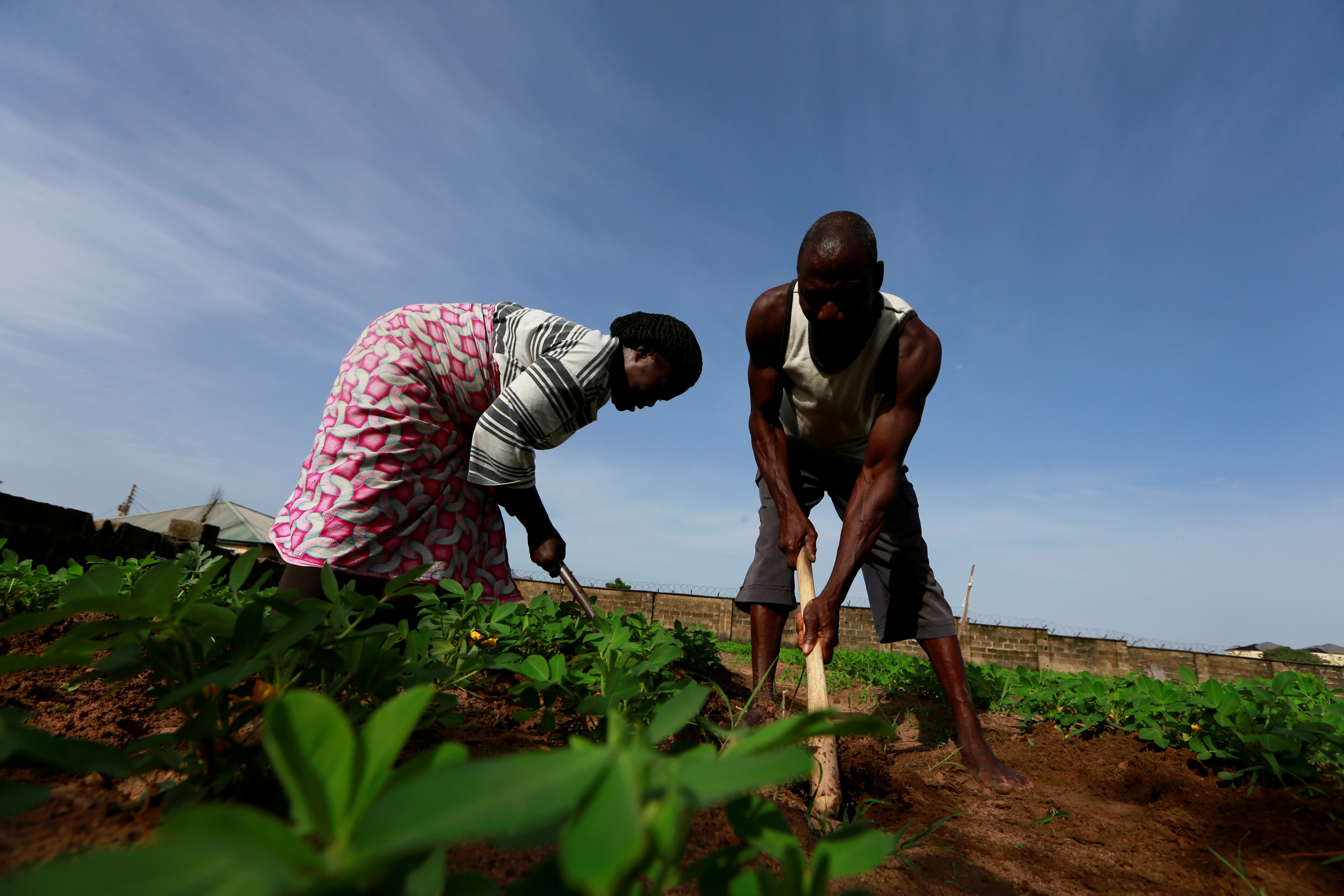 Ajege Zacharia and wife Victoria Kigbu work on their farm in the midst of the coronavirus disease (COVID-19) outbreak in Abuja, Nigeria June 10, 2020. Picture taken June 10, 2020.