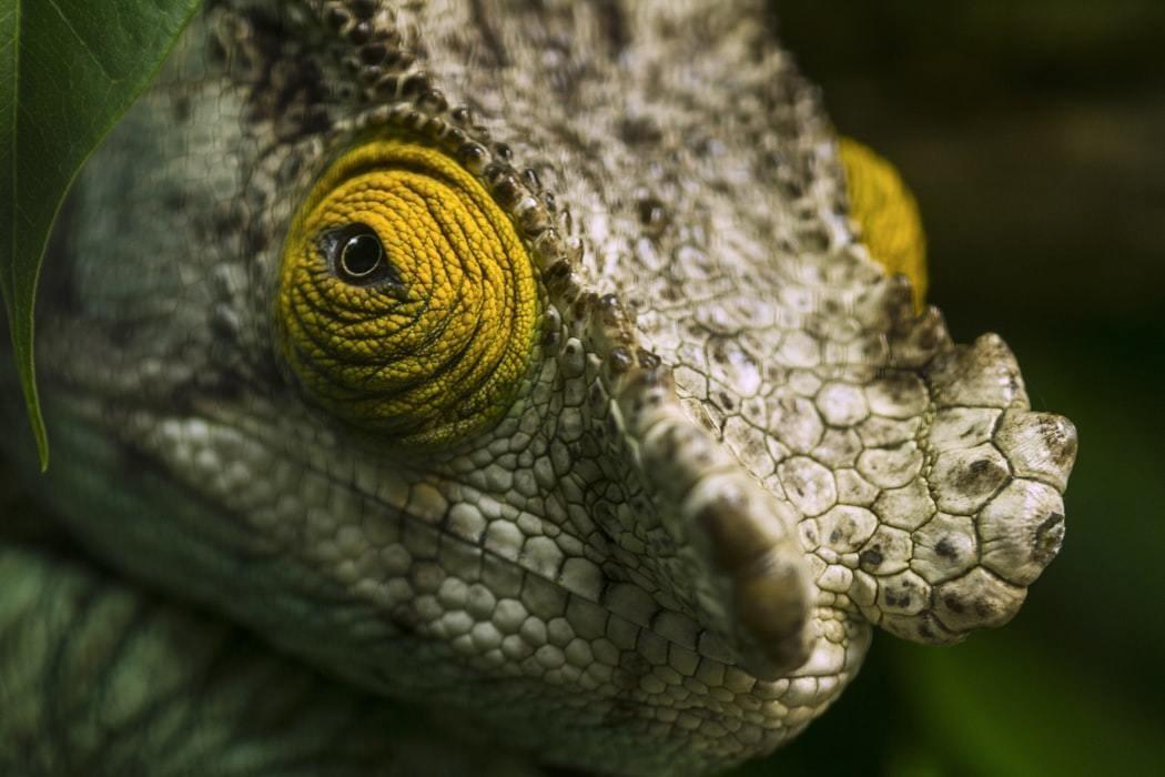 A close-up photo of a lizard.