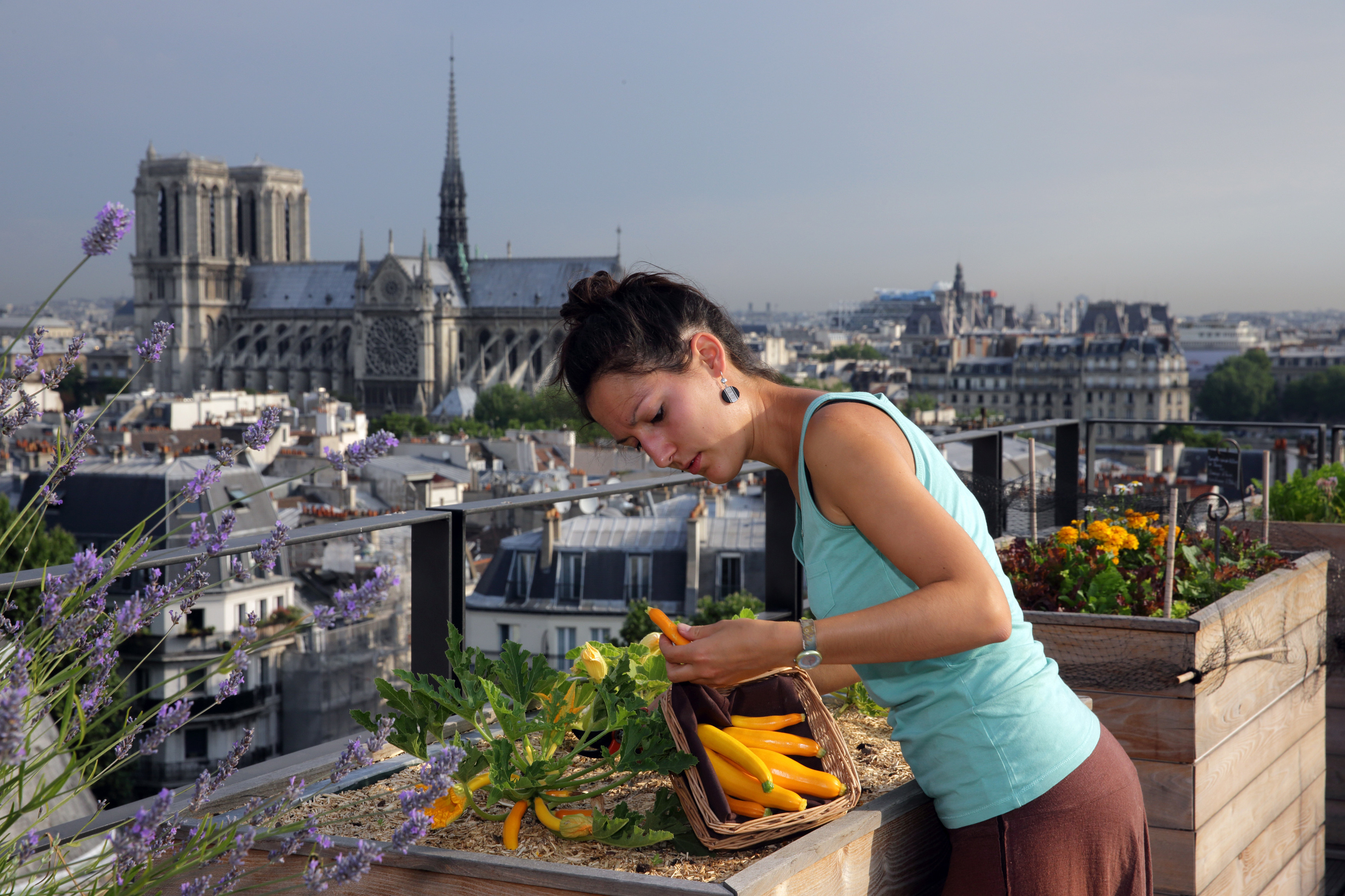 A women tends to her vegetables on a rooftop farm in an urban environment