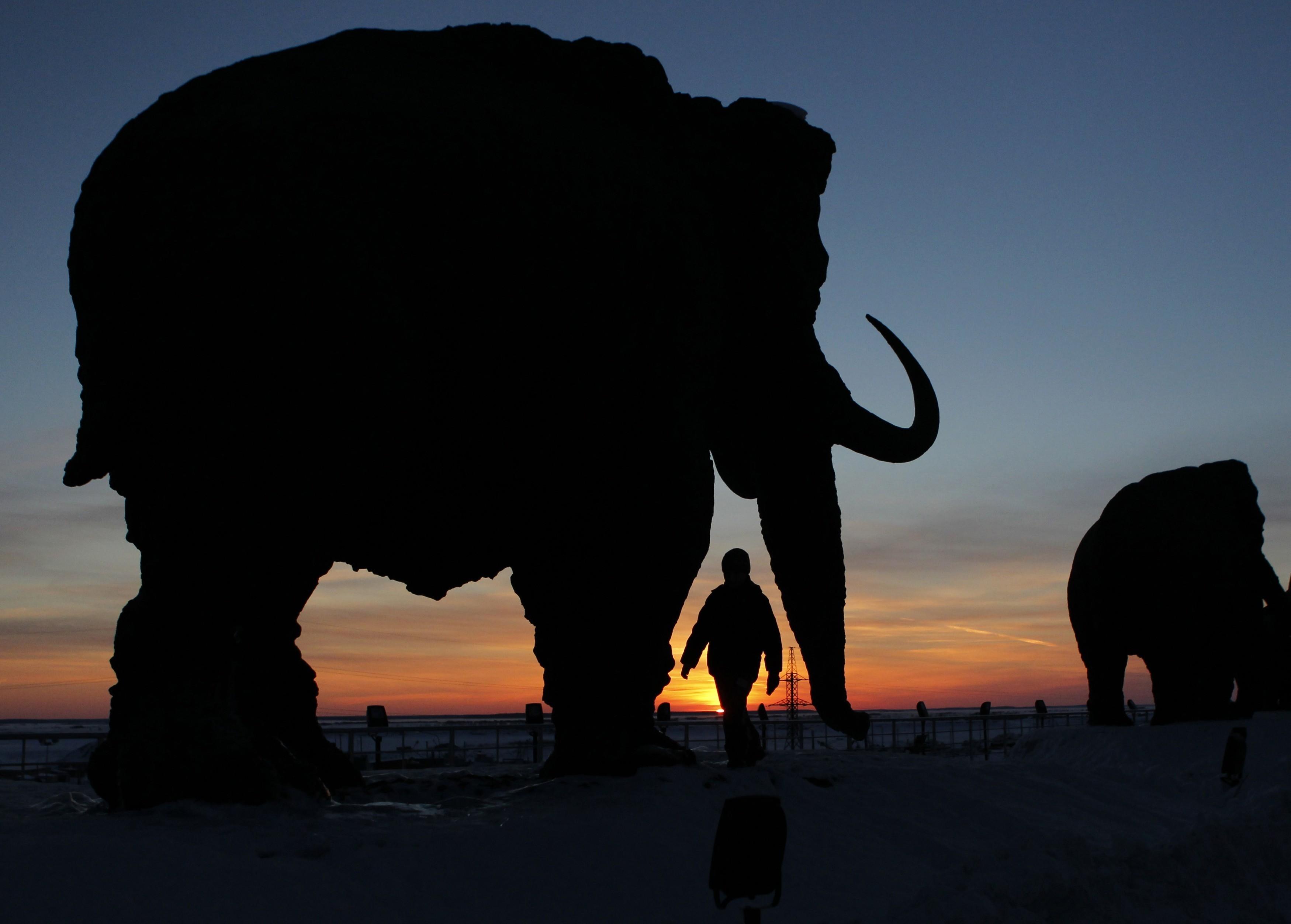 Un niño camina cerca de una escultura que muestra un mamut durante la puesta de sol en las afueras de Khanty-Mansiysk, 4 de marzo de 2011. REUTERS / Tatyana Makeyeva (RUSIA - Etiquetas: SOCIEDAD ANIMALES) - GF2E73716M001