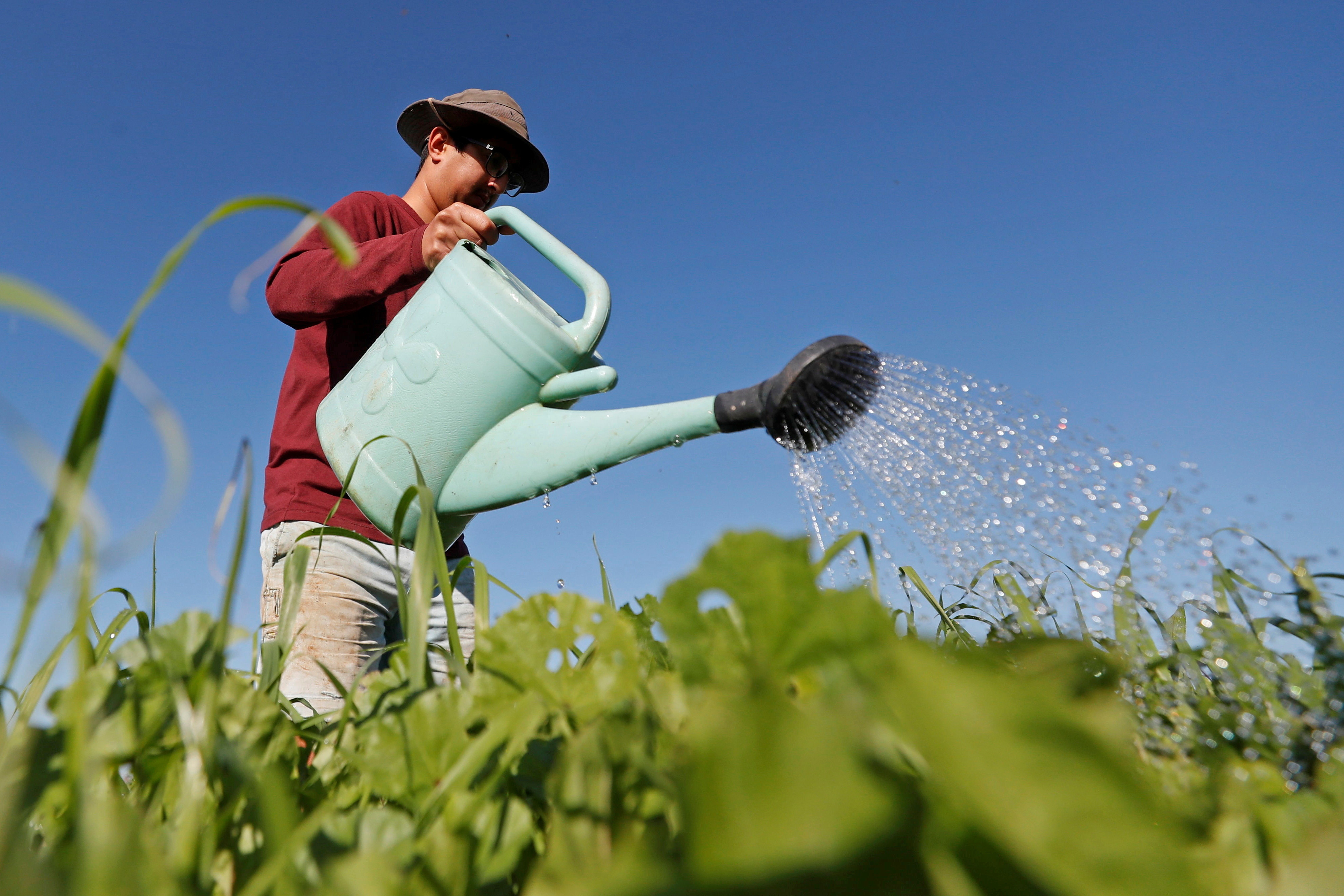 A man waters plants at a Community Supported Agriculture (CSA) farm that produces organic vegetables and fruits, in the village of Bilin in the Israeli-occupied West Bank December 19, 2020. Picture taken December 19, 2020. REUTERS/Mohamad Torokman - RC2NTK9DP8WD