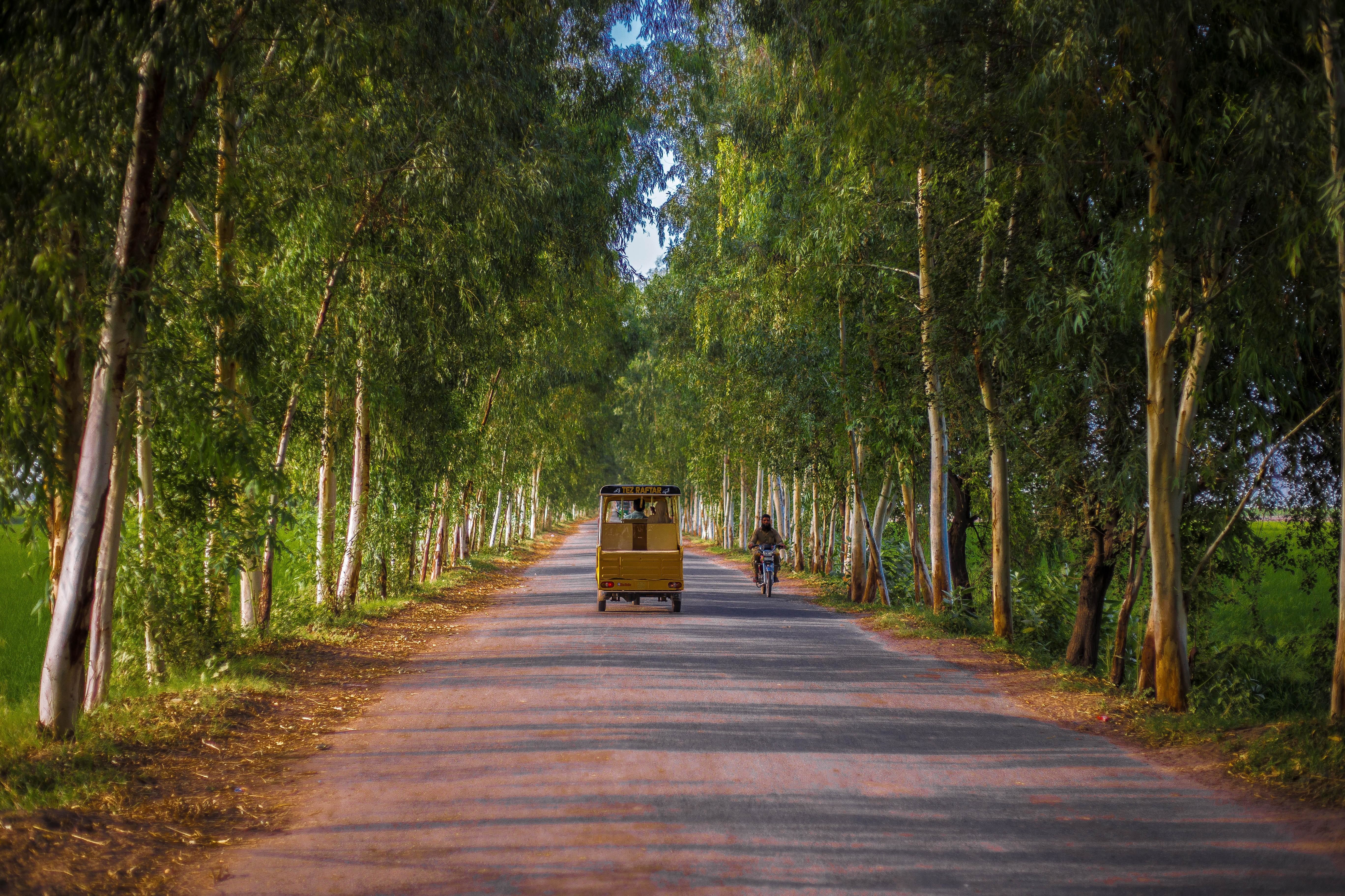 Village road lined with trees, Punjab Pakistan.