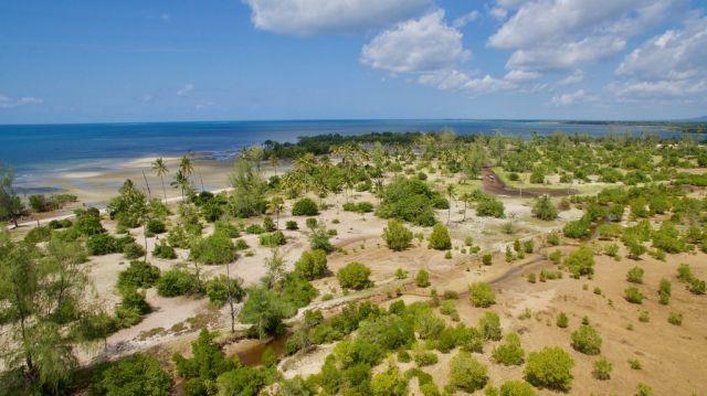 Mangrove restoration area in Vanga, Kenya.
