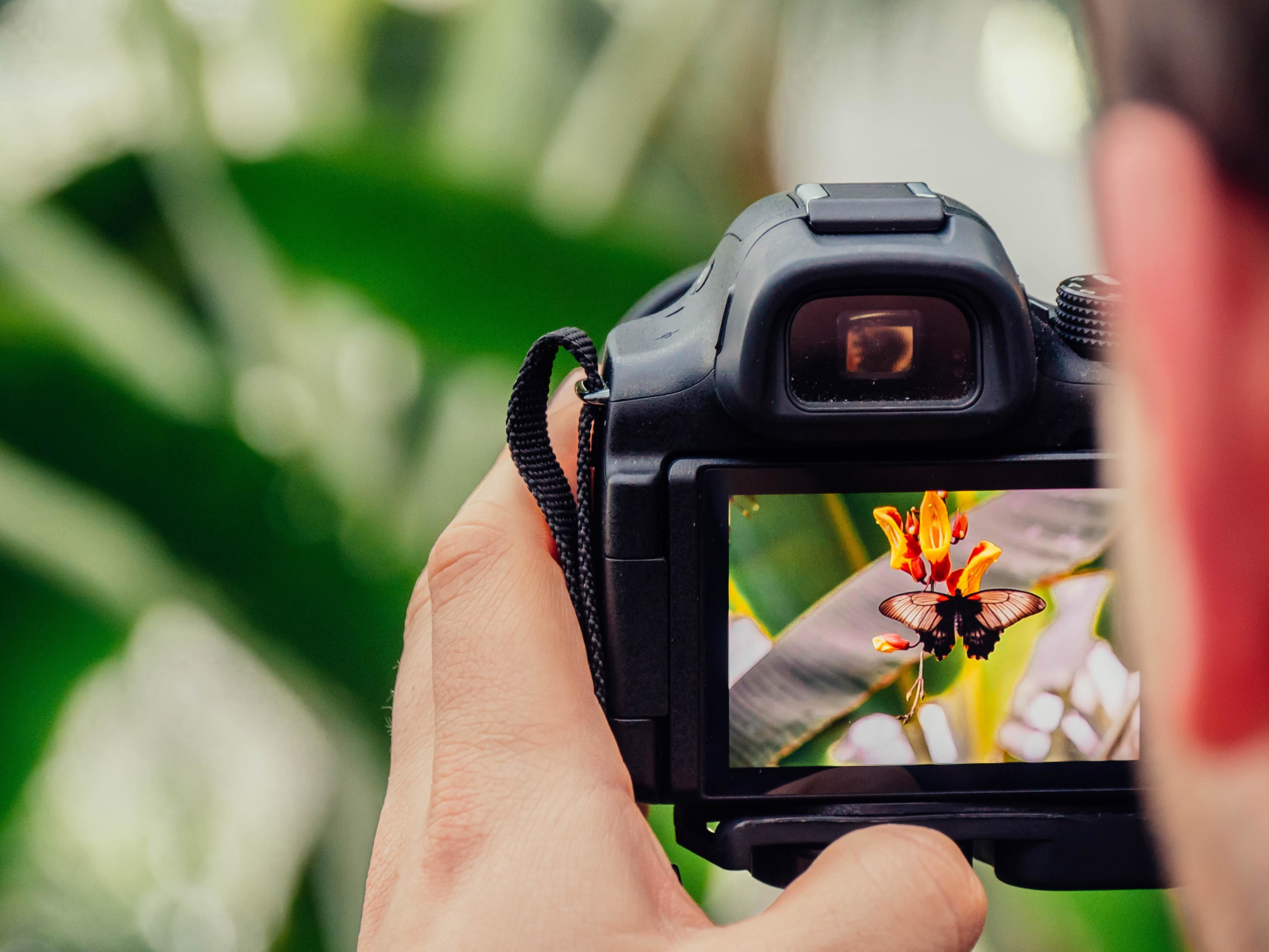 shown here is a man taking a photo of a butterfly. The 2021 Nikon Small World Photomicrography Competition has been helping to raise awareness of the beauty of nature and how we must protect it