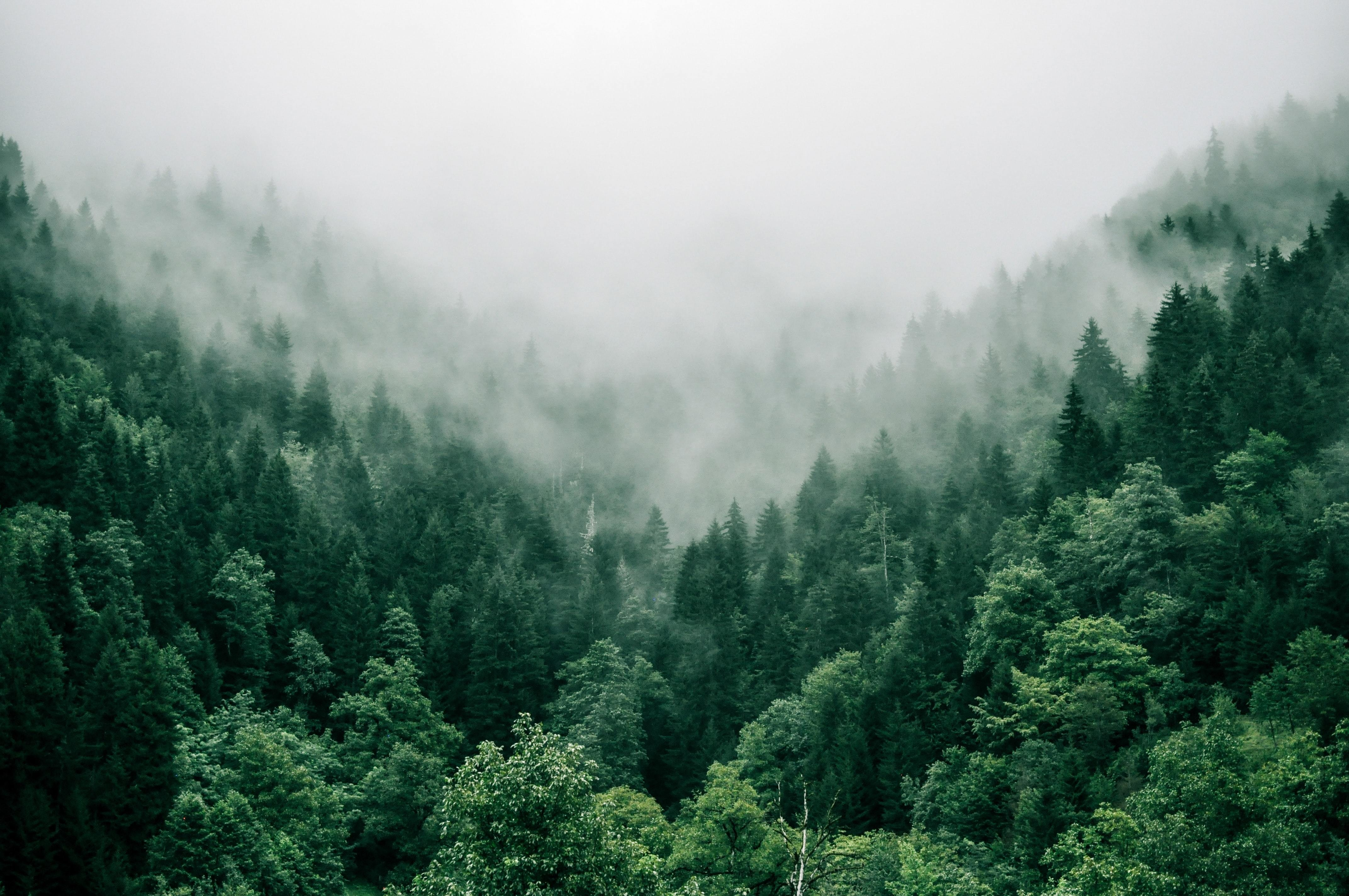 planting trees, like these, ones here, is one way to tackle climate change, but a company in California inoculates trees with probiotics to 'clean' the surrounding soil