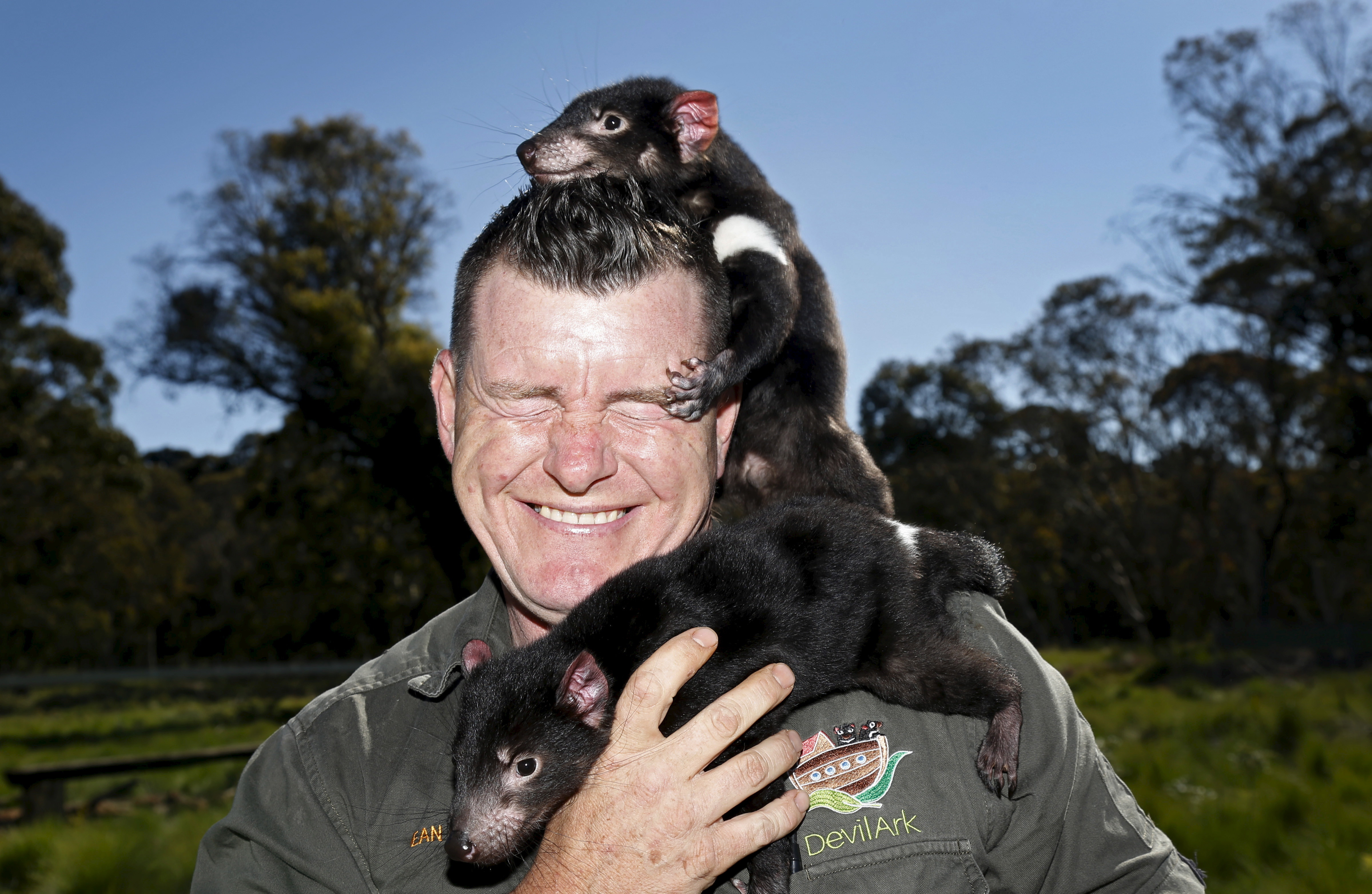A man stand with a big smile on his face as two Tasmanian Devils climb over him