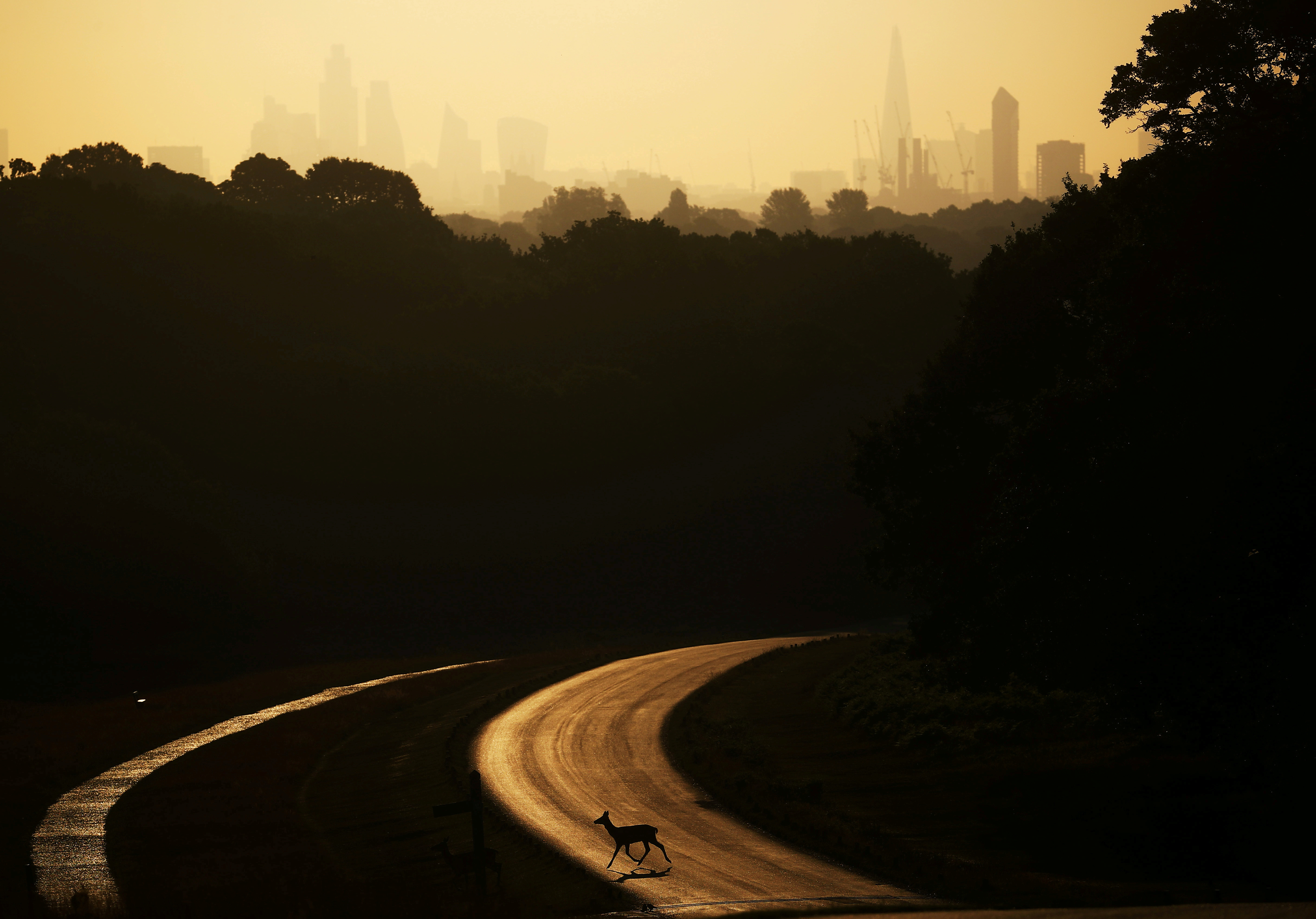 A deer crosses the road as the sun rises behind The Shard and the financial district in Richmond Park in London, Britain, June 25, 2020. REUTERS/Hannah McKay     TPX IMAGES OF THE DAY - RC25GH96PLKM