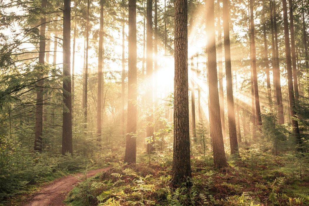 Forests biodiversity environment climate change