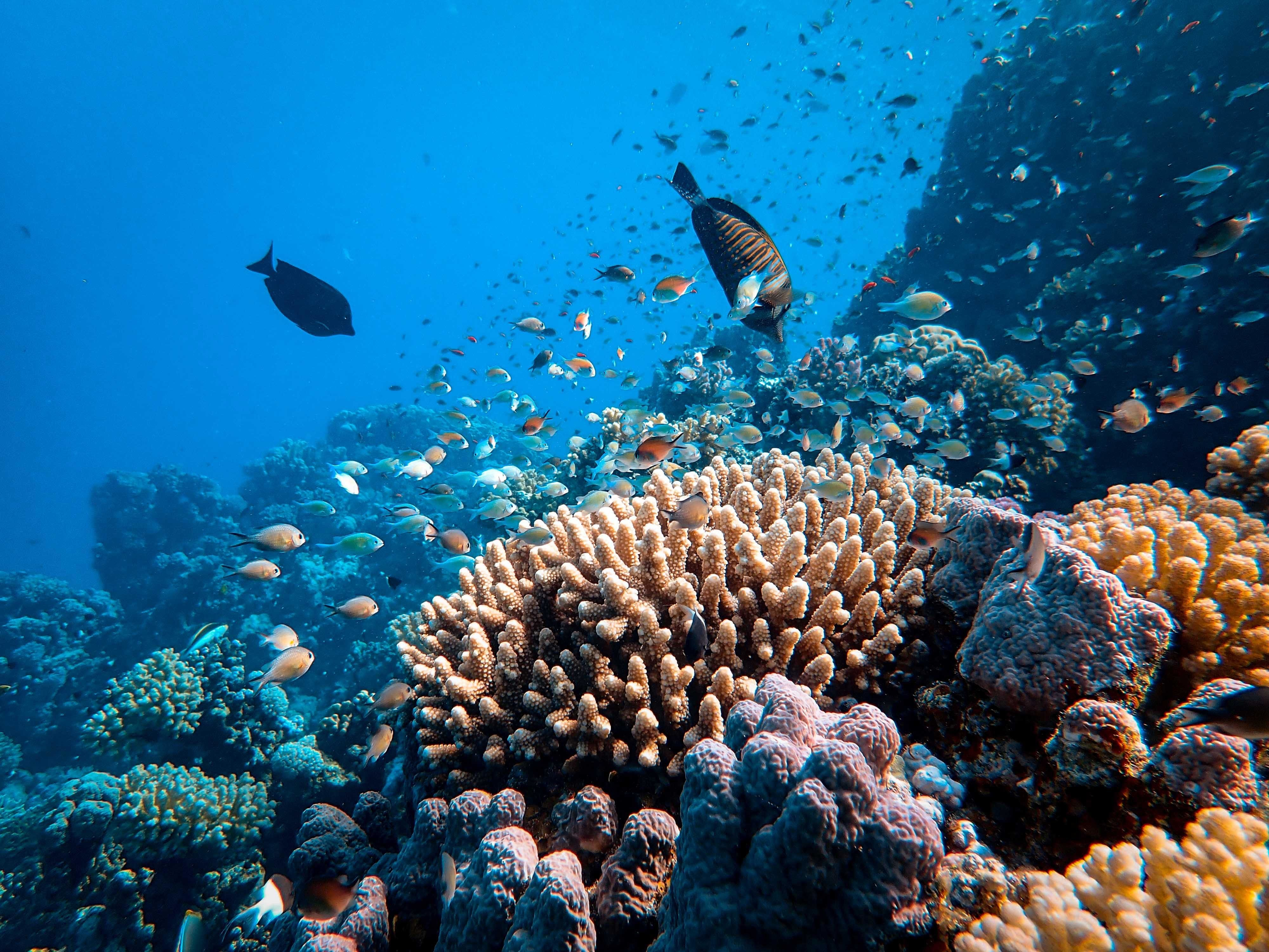 Climate change is negatively affecting marine ecosystems, like this coral reef and these fishes.