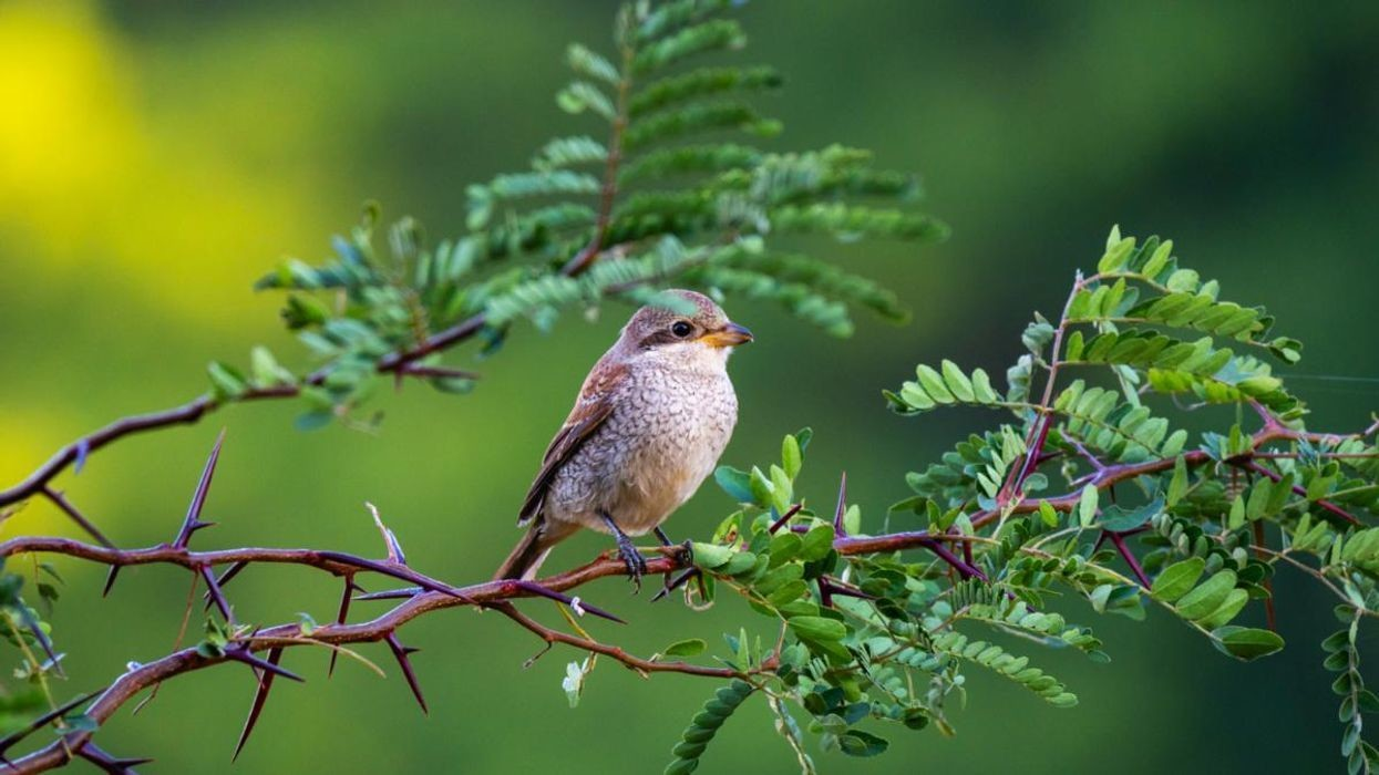 A study published in Ecological Economics has found that the number of birds people experience in their day to day can lead to greater happiness.