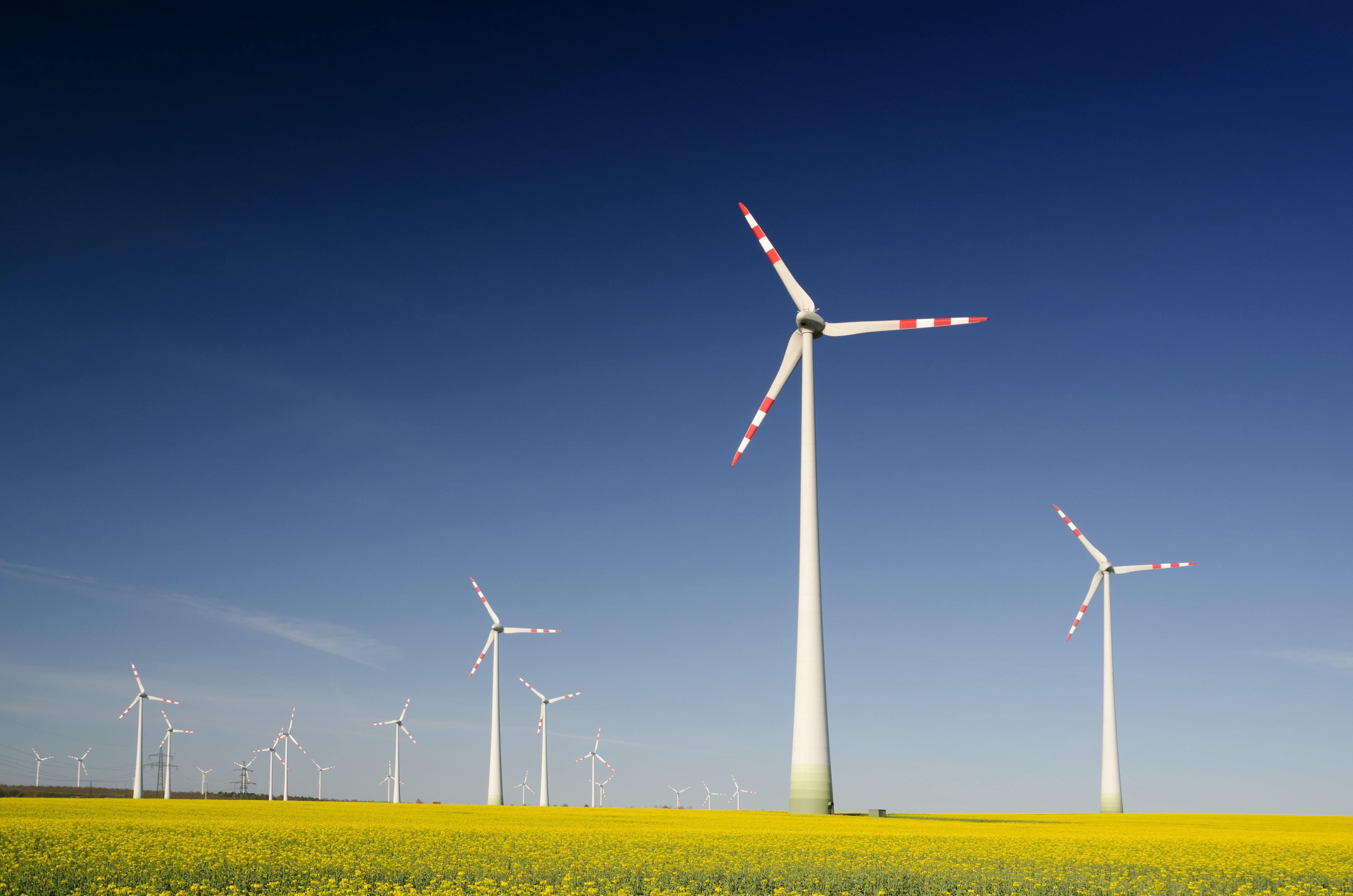 Wind turbines in a field of rape seed