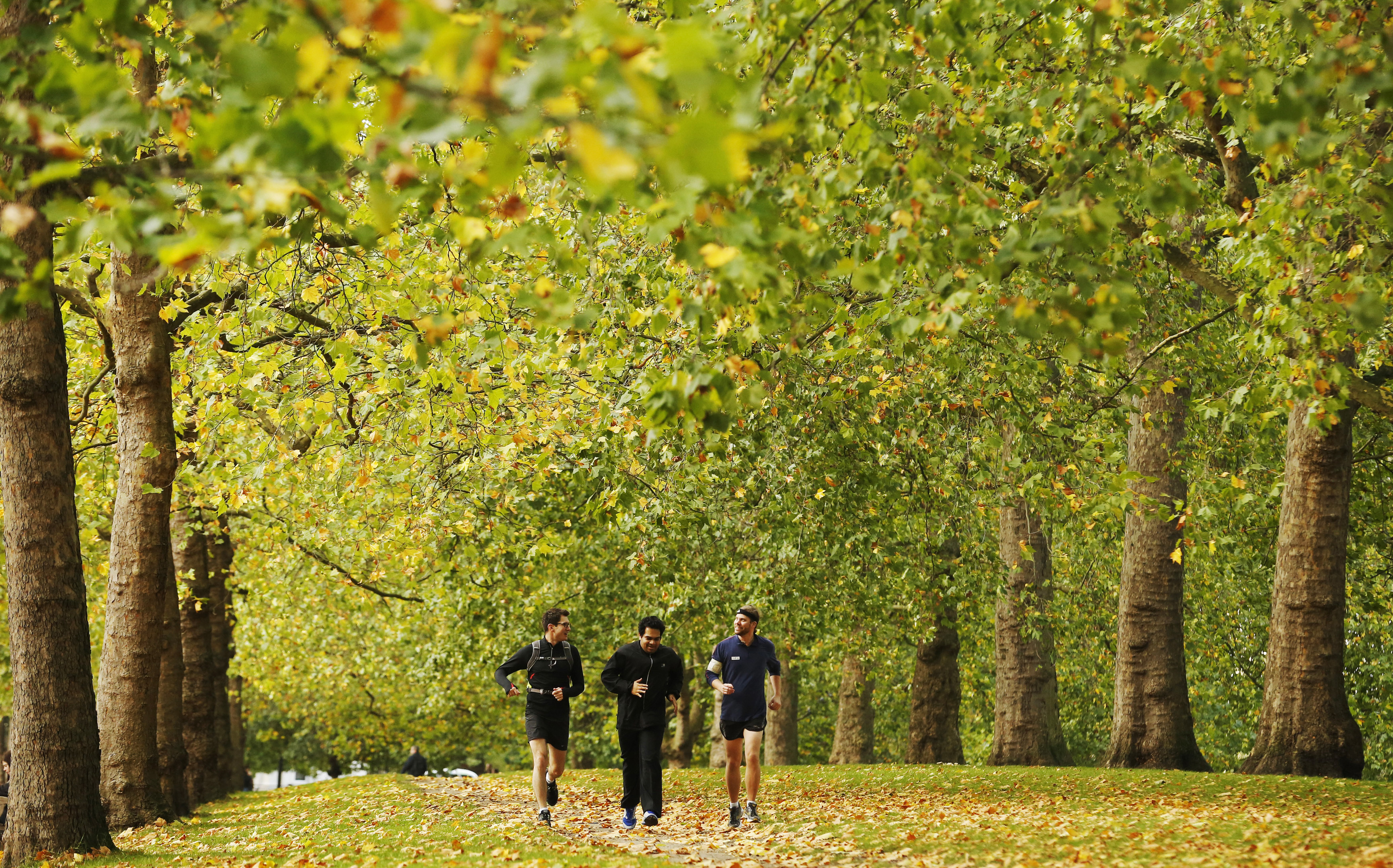 Joggers run along an avenue of trees during autumn at St James's Park in London