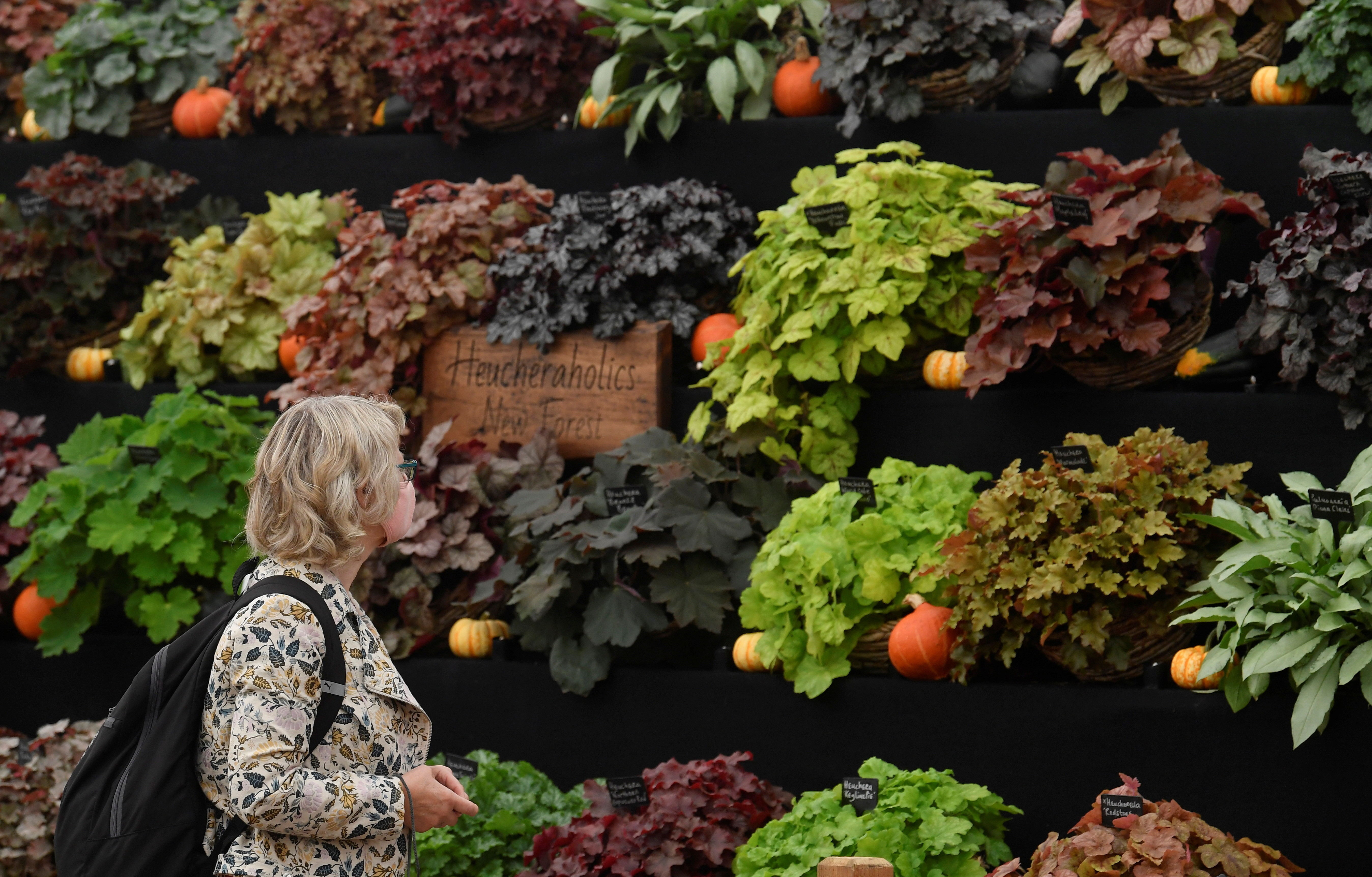 A visitor views a display at the RHS Chelsea Flower Show, delayed from its usual spring dates because of lockdown restrictions amid the spread of the coronavirus disease (COVID-19) pandemic, London, Britain, September 21, 2021. REUTERS/Toby Melville - RC2BUP9SVJ3E