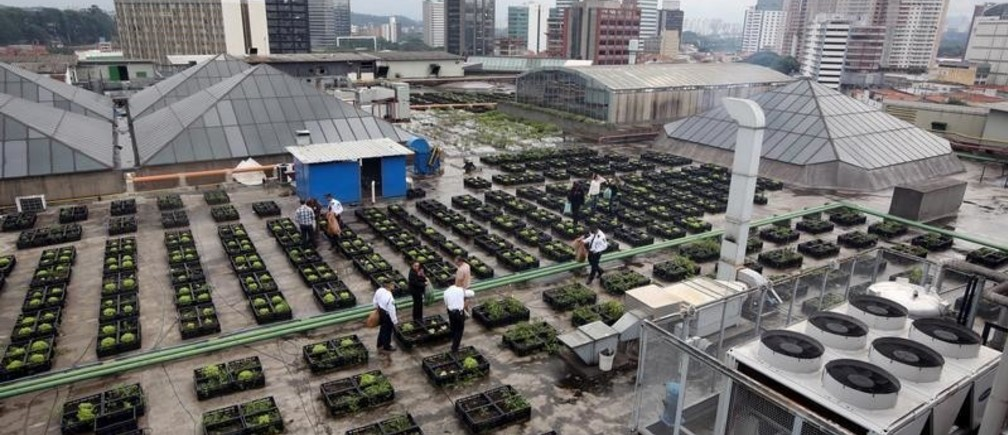 Employees of Eldorado shopping mall harvest vegetables from an organic vegetable garden on the roof of the mall in Sao Paulo, Brazil, July 8, 2015. According to a spokesperson from the mall,  the remains of 10,000 meals served each day from its food courts are used as garden compost to produce vegetables on its roof top, which are later harvested and distributed to the mall's employees. The spokesperson added that the mall is able to recycle up to 25% of around 300 tons worth of garbage produced each month.   Picture taken July 8, 2015.  REUTERS/Paulo Whitaker - GF10000160940