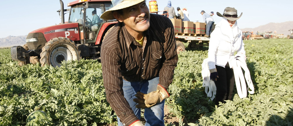 Mexican migrant worker Javier Gonzalez and his wife Guadalupe pick watermelons in Dome Valley near Yuma, Arizona June 18, 2008. REUTERS/Rick Scuteri (UNITED STATES) - RTX73VV