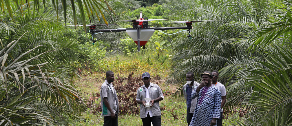 Emmanuel Adou, an Ivorian farmer, looks a drone spraying his oil palm plantation in Tiassale northern Abidjan, Ivory Coast May 21, 2019. Picture taken May 21, 2019. REUTERS/Luc Gnago - RC16D5636DE0