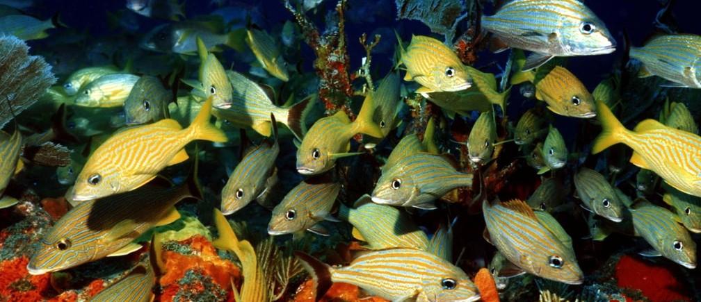 Fish swim through coral reefs off the coast of Mexico's Yucatan peninsula.
