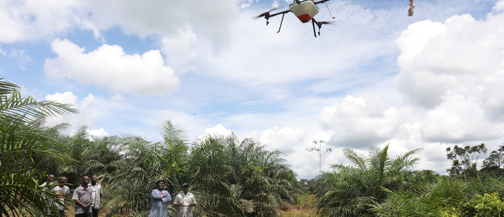 Emmanuel Adou, an Ivorian farmer, looks a drone spraying his oil palm plantation in Tiassale northern Abidjan, Ivory Coast May 21, 2019. Picture taken May 21, 2019. REUTERS/Luc Gnago - RC11AB521690