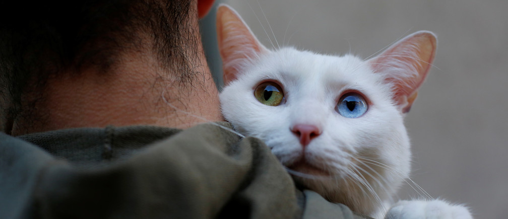 "Two-year-old cat ""Onis"" waits to be blessed by a priest outside San Anton Church in Madrid, Spain, January 17, 2018. Hundreds of pet owners bring their animals to be blessed every year on the day of Saint Anthony, Spain's saint patron of animals. REUTERS/Susana Vera - RC1880A89B10"