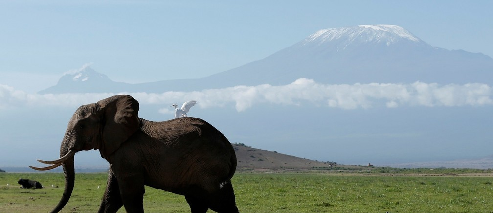 An elephant walks in Amboseli National Park in front of Kilimanjaro Mountain, Kenya, March 19, 2017. REUTERS/Goran Tomasevic TPX IMAGES OF THE DAY - RTX31QSZ