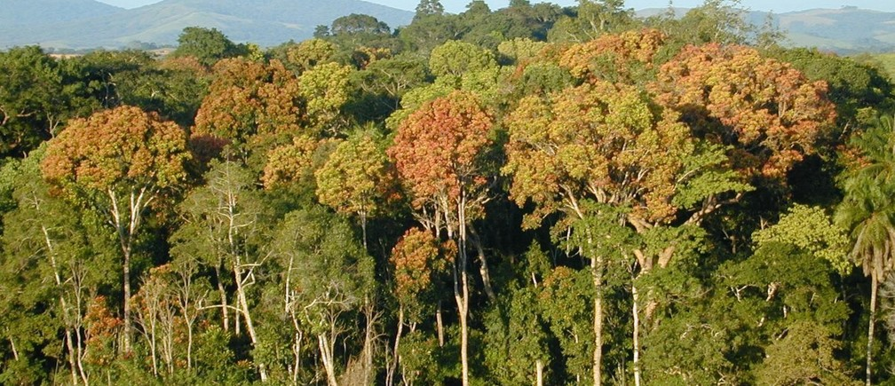 Tropical forest in Gabon, Africa. A NASA-led research team has used a variety of NASA satellite data to create the most precise map ever produced depicting the amount and location of carbon stored in Earth's tropical forests.