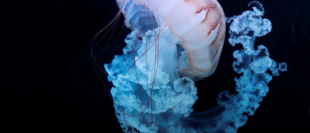 How bionic jellyfish are boosting underwater research