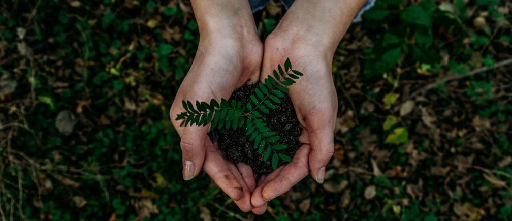 Hands holding seedling.