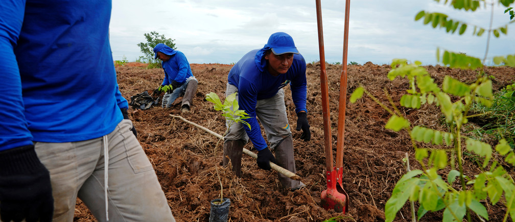Farmers plant trees during a reforestation project in Nova Mutum, Brazil, February 19, 2020. Picture taken February 19, 2020.