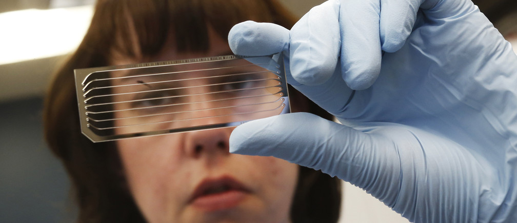 Molecular Genetics Technical Specialist looks at a slide containing DNA.