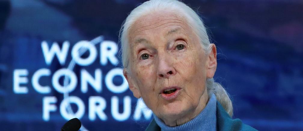 Jane Goodall ha dicho que necesitamos repensar la comida para evitar que las enfermedades zoonóticas se transfieran a los humanos.