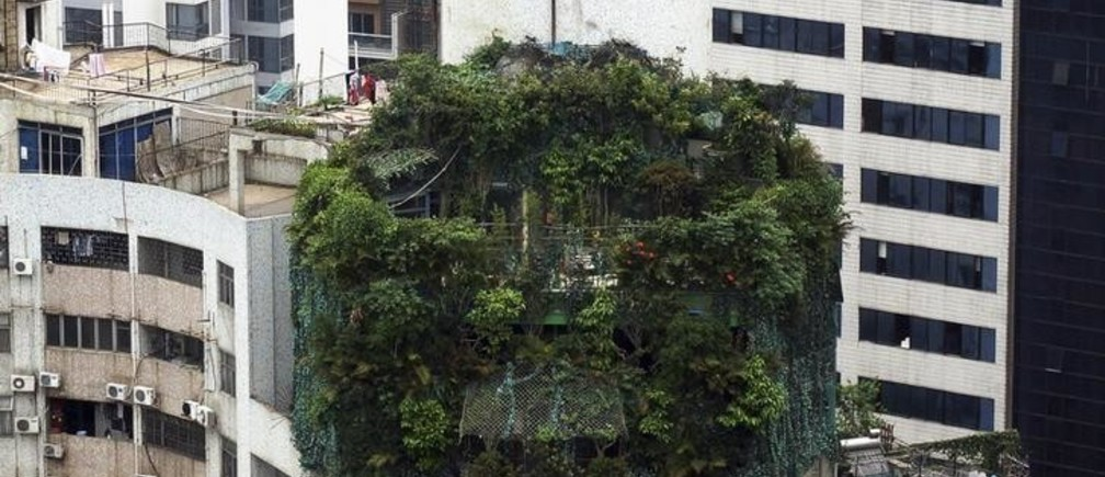 A suspected illegal construction is seen covered by green plants atop a 19-storey residential building in Guangzhou, Guangdong province April 11, 2014. The suspected illegal construction, which takes up an area of about 40 square metres, was built 10 years ago. Local law enforcement department discovered the construction back in 2012, but have failed to find the owner since then, local media reported. REUTERS/China Daily (CHINA - Tags: CRIME LAW SOCIETY REAL ESTATE BUSINESS TPX IMAGES OF THE DAY) CHINA OUT. NO COMMERCIAL OR EDITORIAL SALES IN CHINA