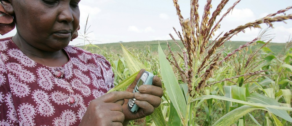 A Kenyan farmer sends a text message to enquire about the latest maize prices from her maize fields in Thigio 35km (22 miles) from the capital Nairobi June 23, 2005.