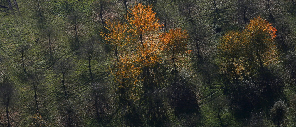 An aerial view shows a field with deciduous trees on a sunny autumn day in Recklinghausen, Germany, October 31, 2015.   REUTERS/Ina Fassbender - GF20000040191