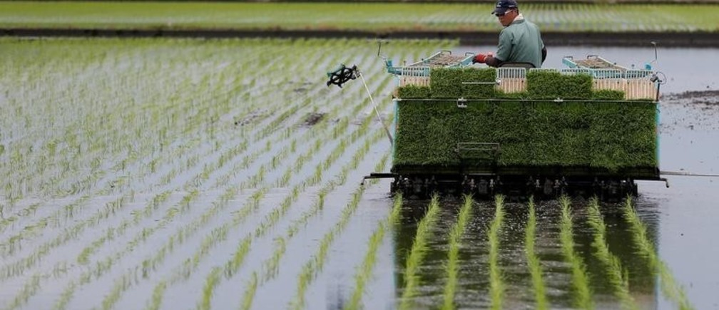 A farmer using rice planting machine conducts rice transplanting in Ryugasaki, Japan June 26, 2017.  Picture taken June 26, 2017.  REUTERS/Issei Kato - RC1AAC63F960