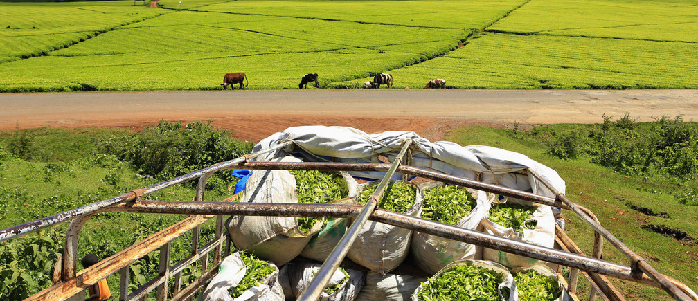A truck is loaded with bags of tea leaves at a plantation in Nandi Hills, in Kenya's highlands region west of capital Nairobi, November 5, 2014.