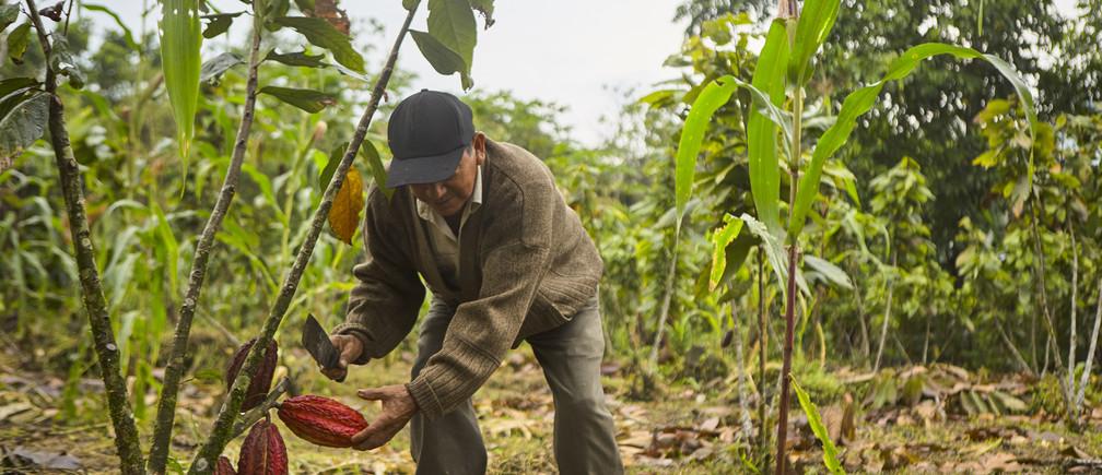 Francisco Numan Tene, cocoa producer from the Ecuadorian Amazon.