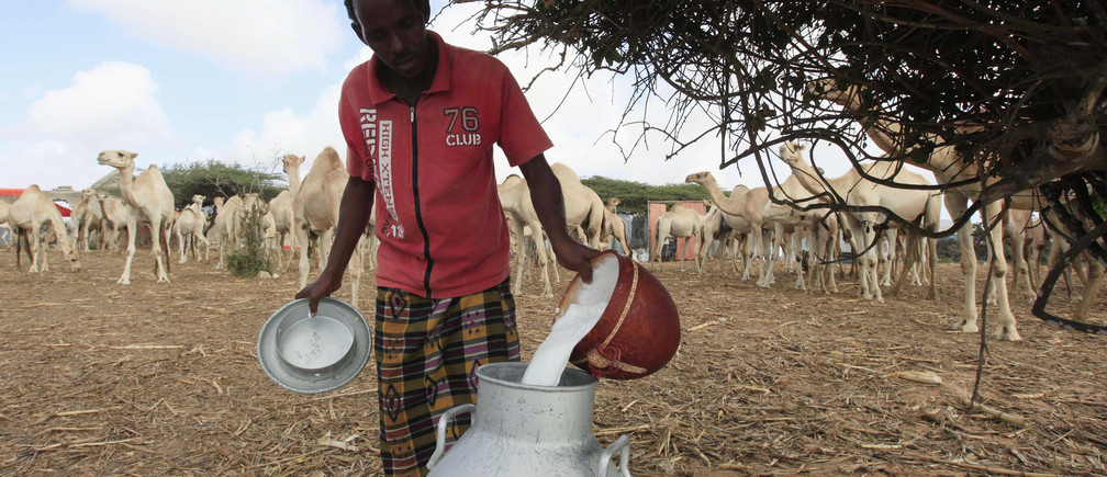 A worker pours camel milk into a container at the Beder Milk and Meat Production Farm Company premises in the outskirts of Somalia's capital Mogadishu August 29, 2013. REUTERS/Feisal Omar