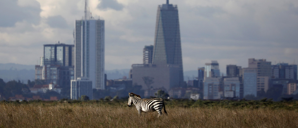 The Nairobi skyline is seen in the background as a zebra walks through the Nairobi National Park, near Nairobi, Kenya, December 3, 2018. REUTERS/Amir Cohen     TPX IMAGES OF THE DAY - RC19DB1558F0