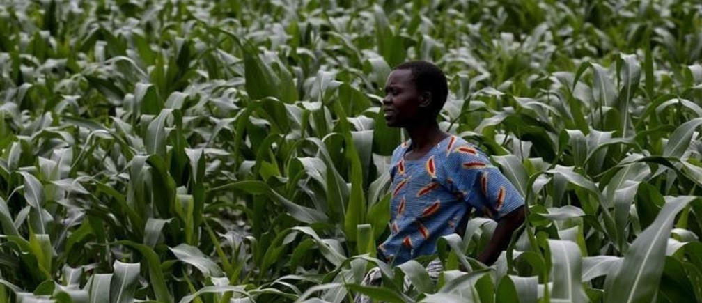 A Malawian subsistence farmer surveys her maize fields in Dowa near the capital Lilongwe, February 3, 2016. Late rains in Malawi threaten the staple maize crop and have pushed prices to record highs. About 14 million people face hunger in Southern Africa because of a drought  exacerbated by an El Nino weather pattern, according to the United Nations World Food Progamme (WFP). REUTERS/Mike Hutchings      TPX IMAGES OF THE DAY