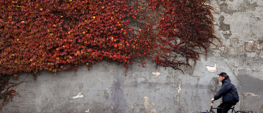 A cyclist rides past autumn-colored ivy climbing the wall of a building in downtown Copenhagen November 2, 2010.  REUTERS/Bob Strong  (DENMARK - Tags: ENVIRONMENT TRANSPORT SOCIETY) - GM1E6B21TQG01