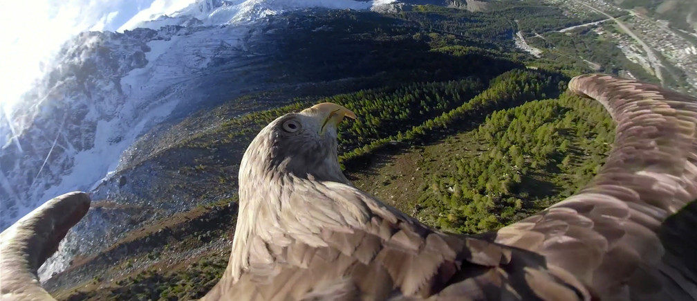 Victor, a nine year old white-tailed eagle equipped with a 360 camera, flies over glaciers and mountains in Chamonix, France, during a preparation flight of the Alpine Eagle Race, an event aiming at raising awareness on global warming, in this still image taken from a video released to Reuters on October 8, 2019. Eagle Wings Foundation/Chopard/Handout via REUTERS ATTENTION EDITORS - THIS IMAGE WAS PROVIDED BY A THIRD PARTY - RC147C2FF040