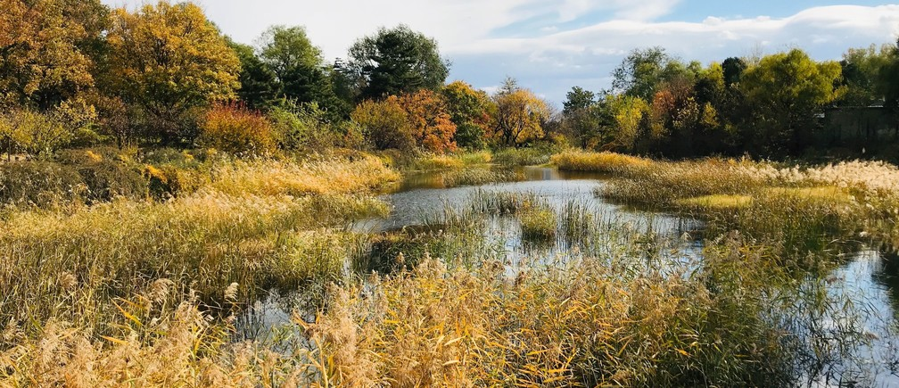 wetlands river lake pond wildlife nature insects bugs fish amphibians ecology ecosystem biodiversity nature natural environment protection sanctuary birds fish trees weeds lily water plants