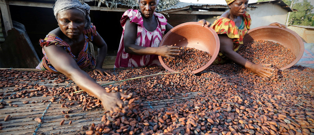 Women from a local cocoa farmers association called BLAYEYA spread cocoa beans to dry in Djangobo, Niable in eastern Ivory Coast, November 17, 2014.  REUTERS/Thierry Gouegnon/File Photo - D1AETIWRMRAA
