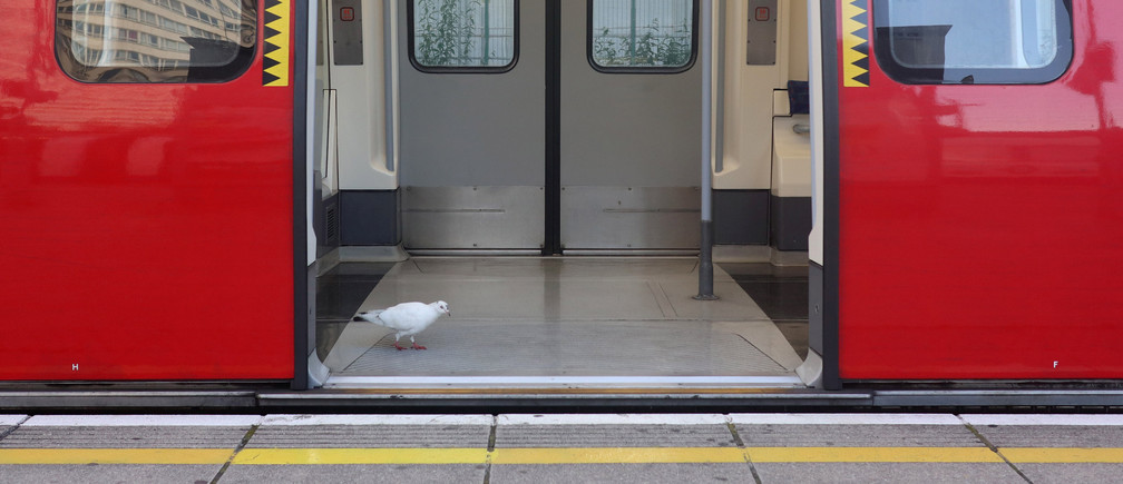 A bird walks inside a commuter underground tube train at Stratford station, east London, Britain, June 13, 2017. REUTERS/Russell Boyce - RC19B8C3D590