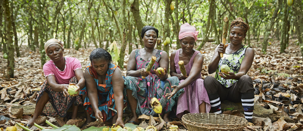 Cocoa farmers at work in west Africa.