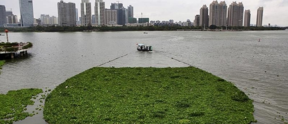 A boat pulls away water lettuce as it cleans up the surface of Xizhi River, in Huizhou, Guangdong province April 8, 2015. Picture taken April 8, 2015. REUTERS/StringerCHINA OUT. NO COMMERCIAL OR EDITORIAL SALES IN CHINA      TPX IMAGES OF THE DAY      - GF10000054397
