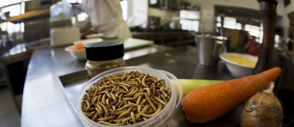 Wander Alblas, 18, student cook at the Rijn IJssel Vakschool prepares a Tjap Choi dish made of mealworms and locusts at the Cooking school at the University of Wageningen April 4, 2014. REUTERS/Michael Kooren (NETHERLANDS - Tags: SOCIETY FOOD) - RTR3PFZW