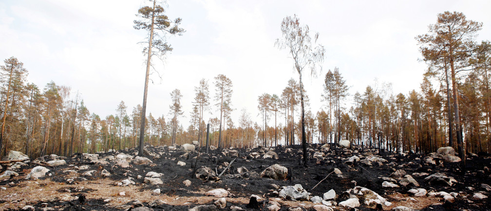 A burnt forest is seen where a wildfire raged, northeast of Ljusdal, central Sweden, July 26, 2018. TT News Agency/via REUTERS      ATTENTION EDITORS - THIS IMAGE WAS PROVIDED BY A THIRD PARTY. SWEDEN OUT. NO COMMERCIAL OR EDITORIAL SALES IN SWEDEN. - RC1E43E04540