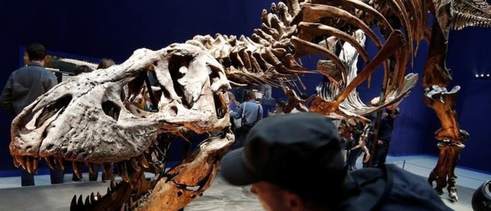 "Visitors look at a 67 million year-old skeleton of a Tyrannosaurus Rex dinosaur, named Trix, during the first day of the exhibition ""A T-Rex in Paris"" at the  French National Museum of Natural History in Paris, France, June 6, 2018."