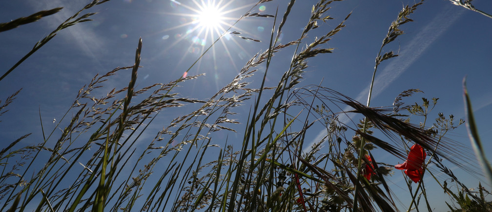 The sun shines in a field as Belgium is undergoing it's dryest April-May period since the end of the 19th century, according to local media, in Diksmuide, Belgium May 28, 2020.  REUTERS/Yves Herman - RC2QXG9CBKS1